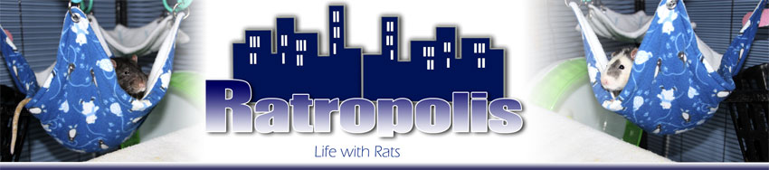 Ratropolis: Living with Rats